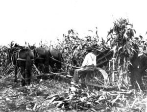 Cutting Corn on Pickering Farm